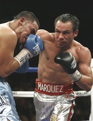 Juan Manuel Marquez lands: HoganPhotos.com
