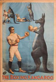 The Aussie boxing scene
