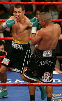 Marco Antonio Barrera, back to his best - HoganPhotos.com